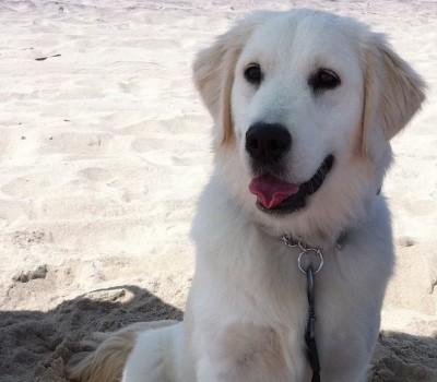 Mochi at beach